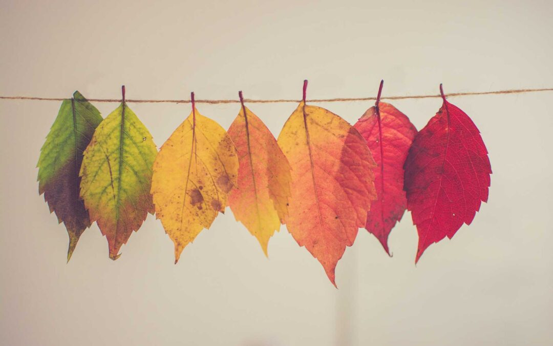 Welcome Fall, Welcome Change!